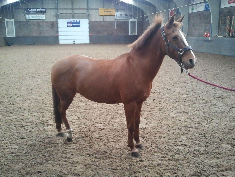 Manege Pony S En Paarden